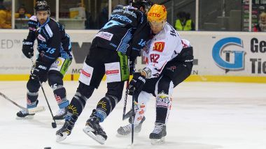 Gamereport: Straubing Tigers - Pinguins Bremerhaven